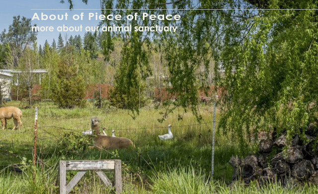 About the Piece of Peace Sanctuary